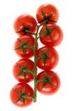 växt tomatvine Fotografering för Bildbyråer