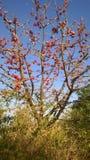 Växt- träd Savar Fotografering för Bildbyråer