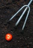 växt utgångspunkt Arkivfoto