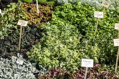 Växt- växter som säljs på, arbeta i trädgården marknaden, växt- lager royaltyfri fotografi