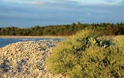 Växt vid havet Royaltyfria Foton