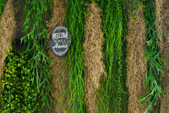 Växtbakgrundstextur Arkivbilder