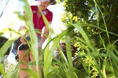 Växtbekämpningsmedel Fotografering för Bildbyråer
