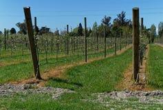 Växtbekämpningsmedelbruk, äpplefruktträdgård, Nya Zeeland royaltyfri foto