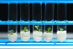 Växtbioteknikserie 3 Arkivbilder