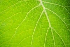 Växtblad Arkivbilder