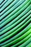 Växtblad arkivfoton