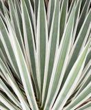 Växtbladbakgrund Arkivbilder