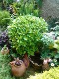 Växtblommaguling Arkivfoto