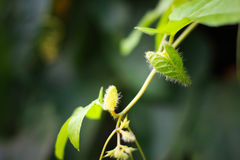 Växtcloseup som är naturlig Arkivbild