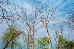 Växtdel, träd, abstrakt begrepp, olyckor och katastrofer Arkivbild