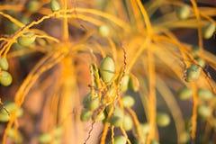 Växten är i strålarna av aftonsolen Royaltyfria Foton