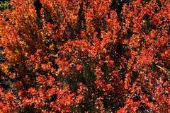 Växten av den yushan nationalparken Fotografering för Bildbyråer