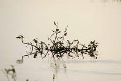 Växten bevattnar in royaltyfri fotografi