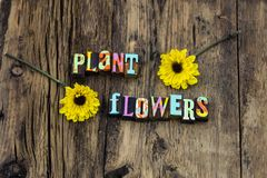 Växten blommar miljön för boktryck för skönhetnaturen den naturliga royaltyfri bild