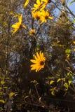 Växten blommar tätt upp Kultiverad blomma Royaltyfria Foton