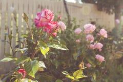 växten för torra blom- grungy leaves för bakgrund befläckte den gammala paper tappning Royaltyfri Bild