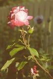 växten för torra blom- grungy leaves för bakgrund befläckte den gammala paper tappning Arkivfoton