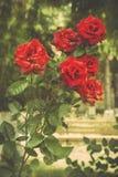 växten för torra blom- grungy leaves för bakgrund befläckte den gammala paper tappning Fotografering för Bildbyråer