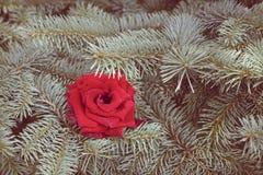 växten för torra blom- grungy leaves för bakgrund befläckte den gammala paper tappning Arkivfoto
