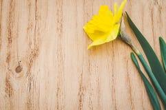 växten för torra blom- grungy leaves för bakgrund befläckte den gammala paper tappning Gul pingstlilja på en gammal trätabell Royaltyfri Fotografi