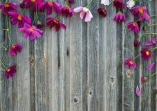 växten för torra blom- grungy leaves för bakgrund befläckte den gammala paper tappning Sommar blommar på ridit ut trä, t Royaltyfria Bilder