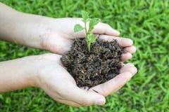 växten i händer - gräs bakgrund, manhänder som rymmer jord och pl Royaltyfri Foto
