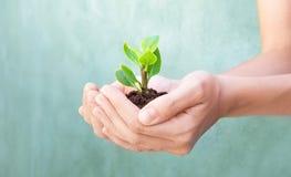 Växten i händer växer upp, jord Royaltyfri Bild