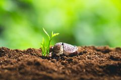 Växten kärnar ur att plantera trädtillväxt, fröt spirar på jorder för bra kvalitet i natur arkivfoto
