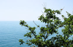växten och havet, filialerna av växter på bakgrunden av havet Arkivbilder