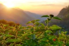 Växten på soluppgången Arkivfoto