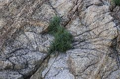 Växten växer i en spricka fotografering för bildbyråer