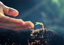 Växten växer och bokehbakgrund, begrepp Arkivfoto