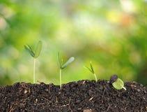 Växten växer och bokehbakgrund, begrepp Arkivbild