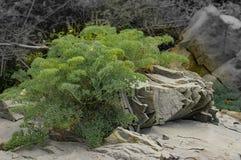 Växten växer upp på den spruckna stenen Royaltyfria Bilder