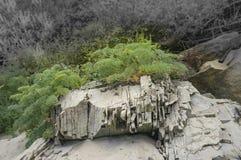 Växten växer upp på den spruckna stenen Fotografering för Bildbyråer