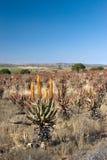 växter 1 Fotografering för Bildbyråer