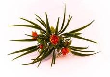 växter Royaltyfri Bild