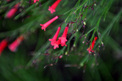 växter Arkivbilder