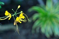 växter Royaltyfria Bilder