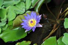 växter fotografering för bildbyråer