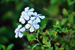 växter Arkivfoto