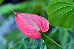 växter royaltyfri fotografi