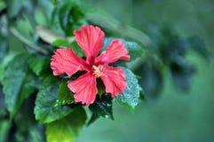 växter Royaltyfri Foto