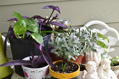 växter Arkivbild