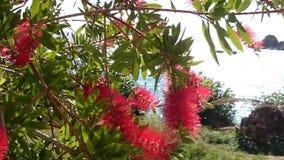 Växter av Korfu 2 Arkivfoto