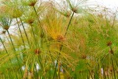 Växter av madeiran Royaltyfri Fotografi