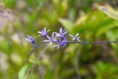 Växter av madeiran Royaltyfri Bild