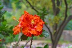 Växter av madeiran Royaltyfria Bilder