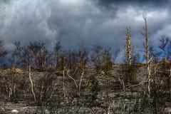 Växter av skog-tundran dog på grund av den luftföroreningplatina-mynt växten Royaltyfri Bild
